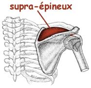 Syndrome myo-fascial du supra-épineux