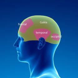 muscleoccipitofrontalanatomie