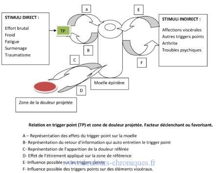 Le syndrome myo-fascial. Physiologie douleur projetée trigger point